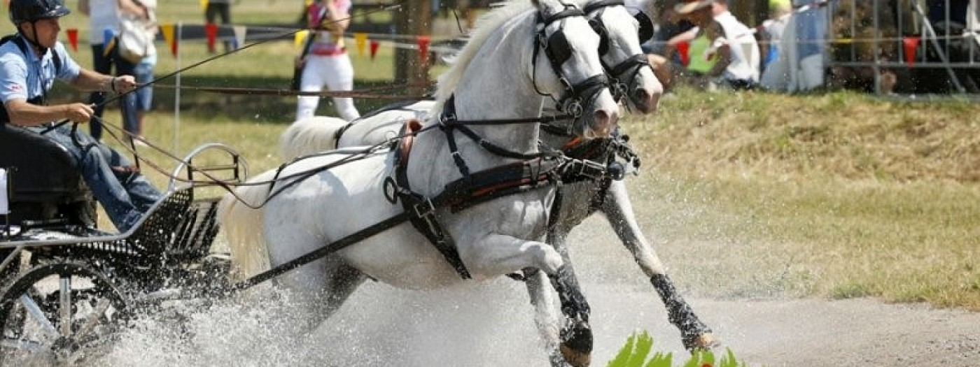International carriage driving competition