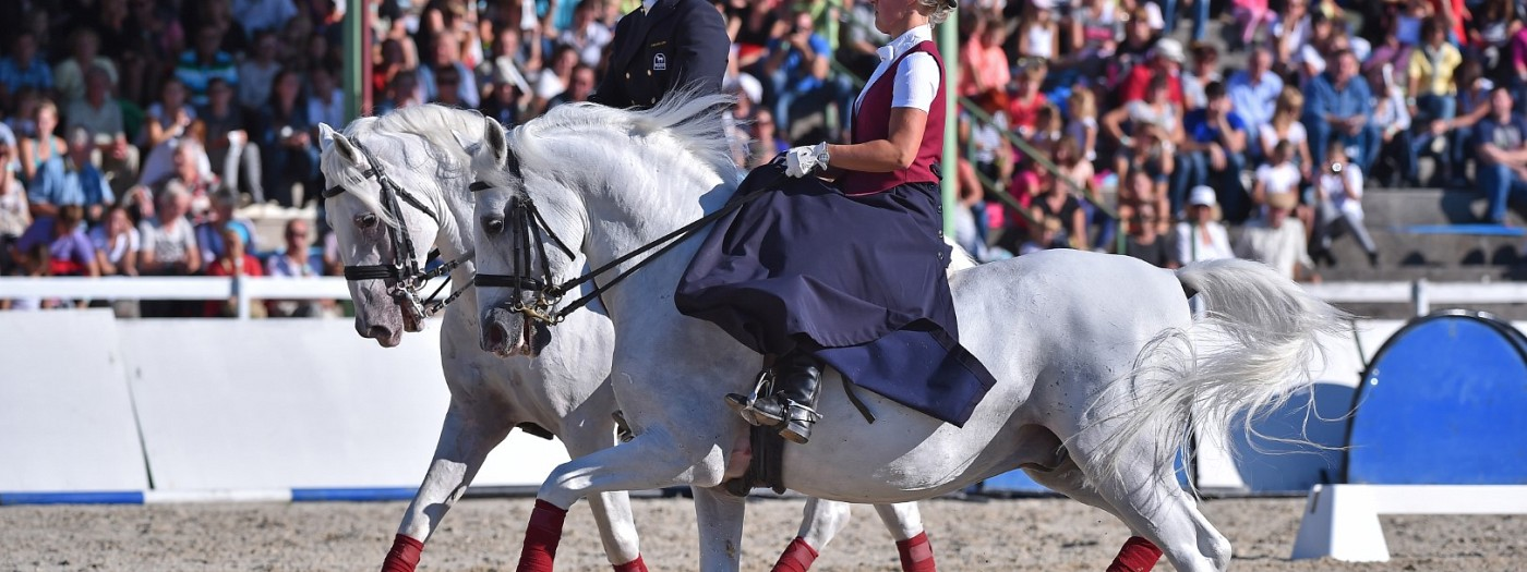 Day of the Lipica Stud Farm: Vlado Kreslin & Magnificent Maelle in a musical-equestrian spectacle »white Lipizzans and a black guitar«