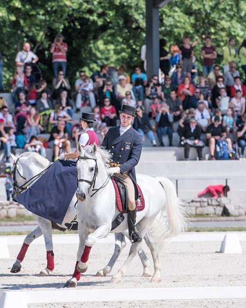 Day of the Lipizzan Horse